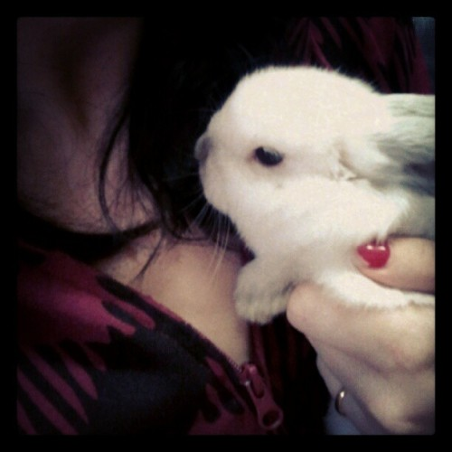 morning snuggles with Azumi #bunny #rabbit #pet (Taken with Instagram)