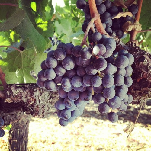 #napa  (Taken with Instagram)