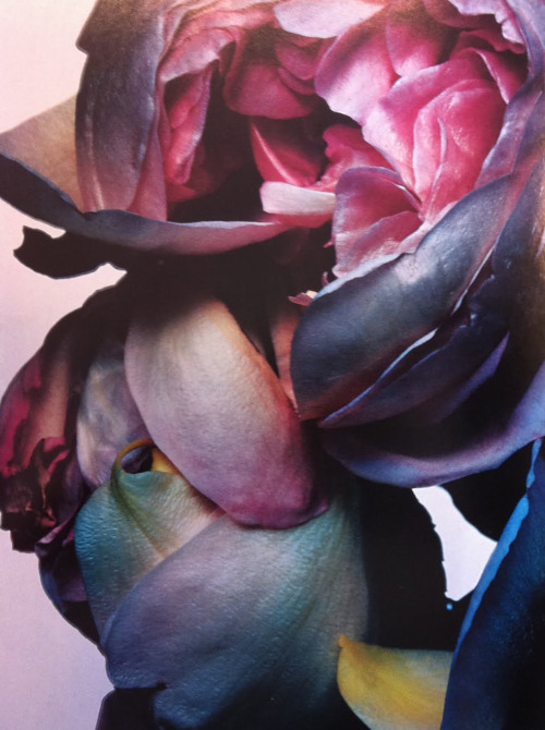 bienenkiste:  Photographed by Nick Knight, 2003