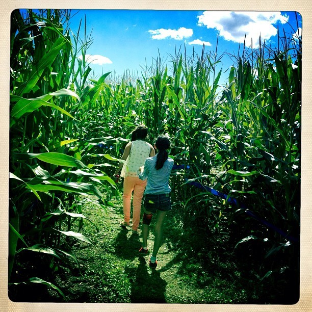 The #corn #maze… #apple #picking #orchard #farm day! #hipstamatic #hipstaconnect #iphoneography #purehipstamatic #remages  (Taken with Instagram at Barton Orchards)
