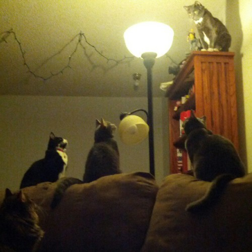 cognitivedissonance:  Five cats versus one moth. The moth is beating each #cat. #catstagram (Taken with Instagram)