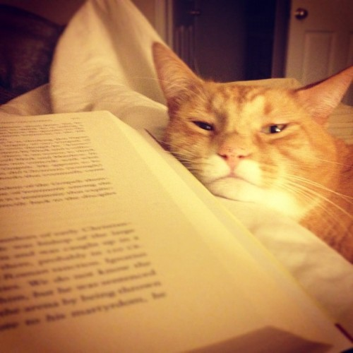 Kittehs make reading better. (Taken with Instagram)