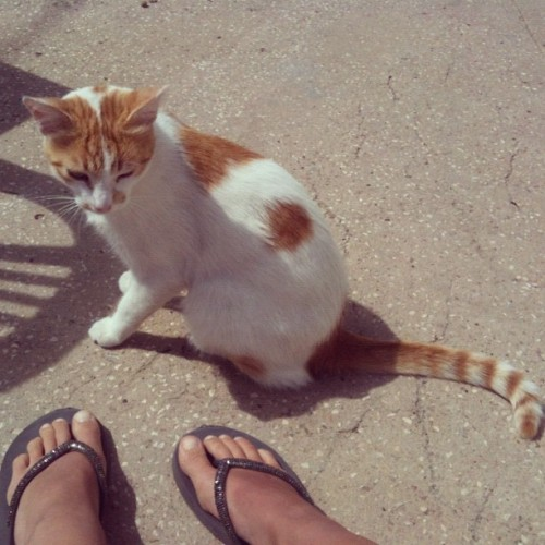 #cat #kitty #summer  (Taken with Instagram)