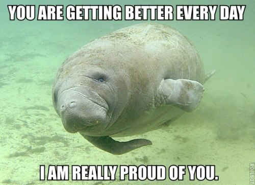 "the-absolute-funniest-posts:  calmingmanatee:  [IMAGE DESCRIPTION: A manatee is swimming through clear water. It is close to the bottom, kicking off a cloud of sand around its fins. TEXT: ""You are getting better every day. I am really proud of you.""]   Via/Follow The Absolute Greatest Posts…ever.  Honestly, this picture encouraged me to stop going on Tumblr and go back to studying for my tax midterm that's occurring in 5 hours."