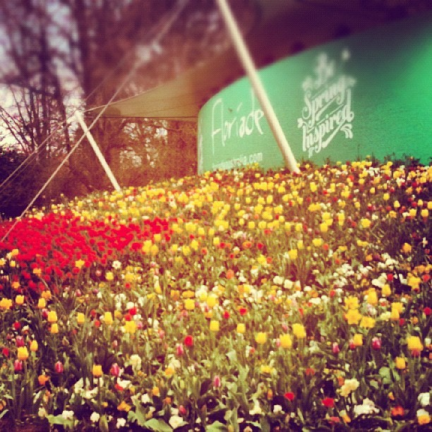 #floriade 2012 #canberra #flowers #art (Taken with Instagram)
