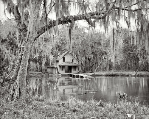 """De Leon Springs near DeLand"", 1904 Shorpy"