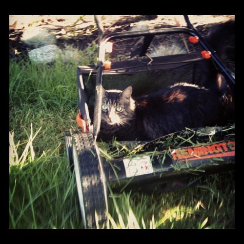 Lawn mower cat is in your head now.  (Taken with Instagram)