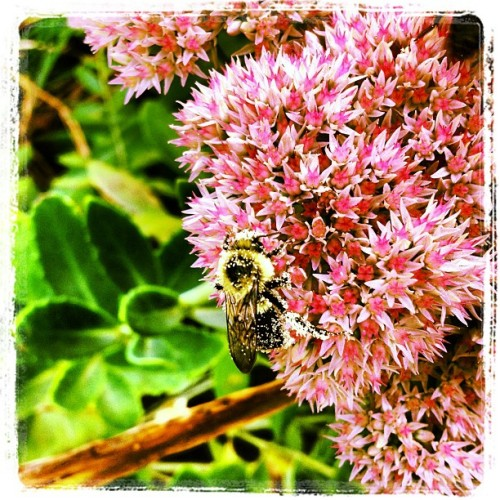 The Great #Pollinator (Taken with Instagram)
