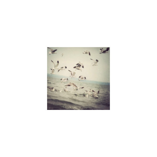 IS Photography   (clipped to polyvore.com)
