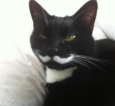 I need a mustache cat in my life.