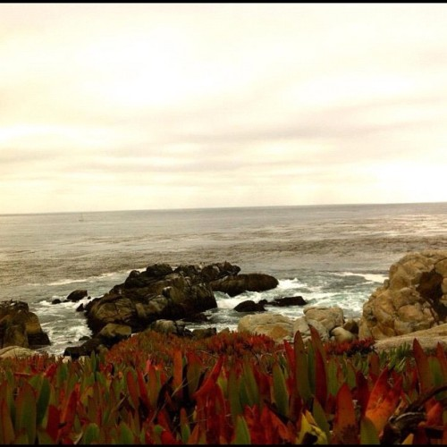 A lonely lonely world! Picture  taken at #Monterey #17miledrive #california   (Taken with Instagram)