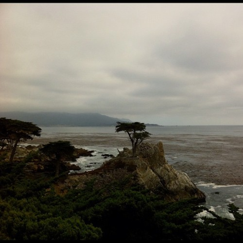 #loneCypress along the drive #17miledrive in #monterey #california perched over the pacific for over hundreds of years. #250years. Hopes to live another #50years. #life  (Taken with Instagram)