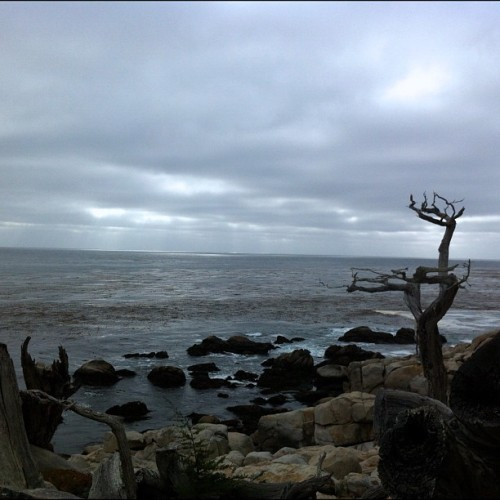 #monterey #california #17miledrive (Taken with Instagram)