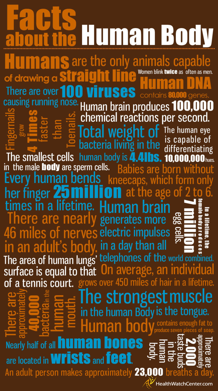 Facts about the human body poster. #scichat  Source: Enjoy English with Isabel You may also like… BioDigital Human Ellen McHenry's Basement Workshop Science Interactive Body