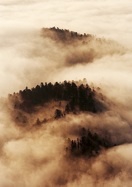 Morning fog… by sm-photography on Flickr.