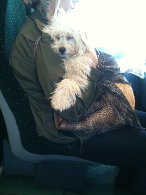 Dog hug, kind of like a bear hug, but floppier. Seen by @Artytypes on a train - September 2012