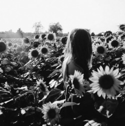 snuggul:  ahh sunflowers!
