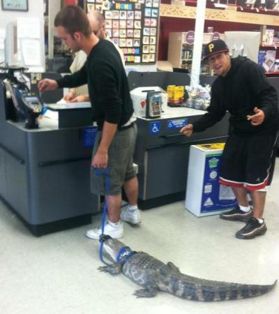 "thebakerschronicles:  My friend took his damn alligator to petco  …and all I can think is, ""..so, Louisiana or Florida?"""