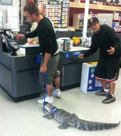 thebakerschronicles:  My friend took his damn alligator to petco  Sir. What are you doing, sir?