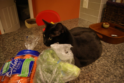 get off of there cat. you don't even like vegetables!