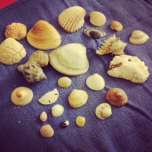 Guess what I found! Some of the shells I collected on the beaches in Mexico! I wish I could go back:/ #shells#mexico#beaches (Taken with Instagram)