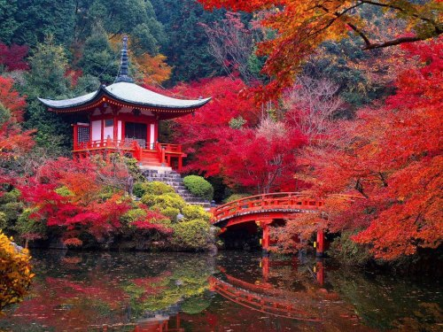 artofadesignermind:  Daigo-ji Temple in Autumn - Kyoto, Japan