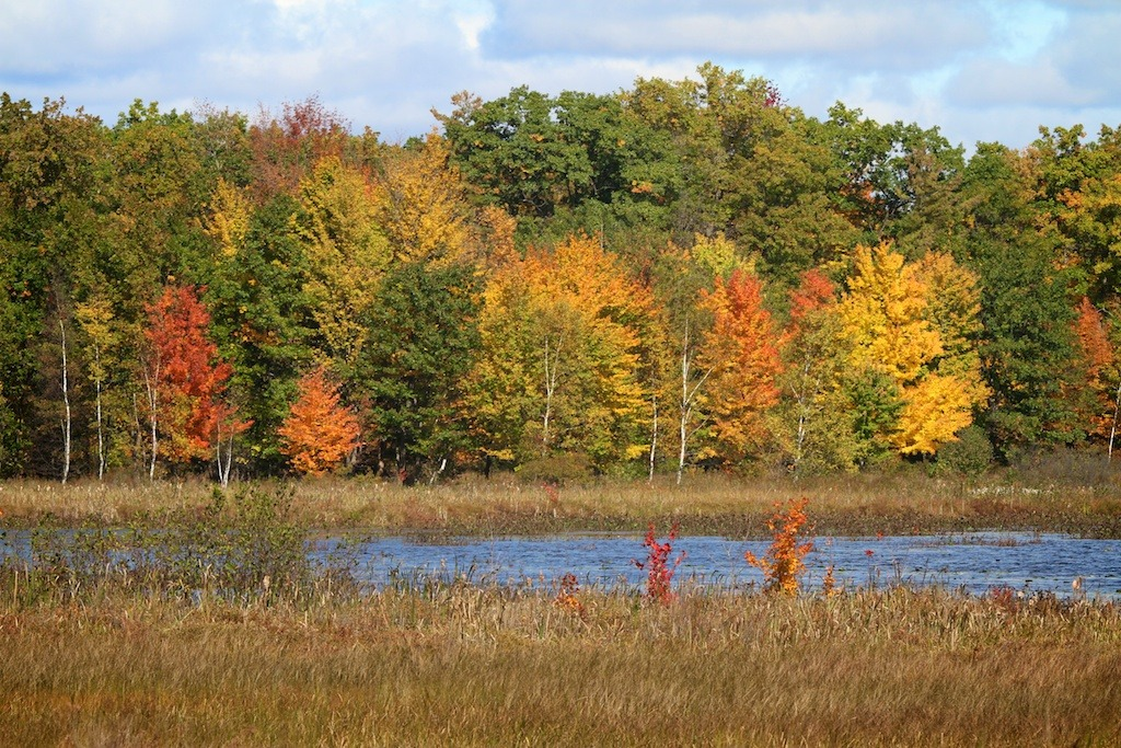 fall comes to Mud Lake