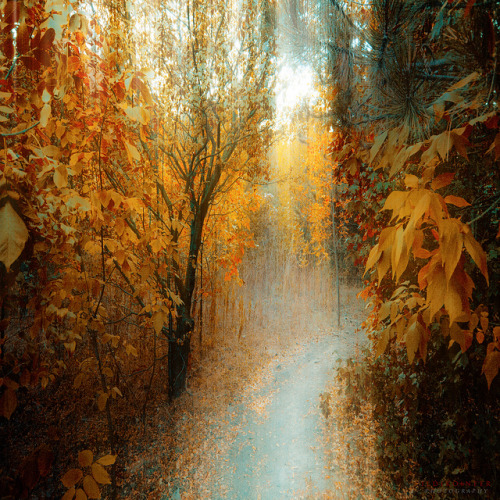 autumn path by ildikoneer on Flickr.