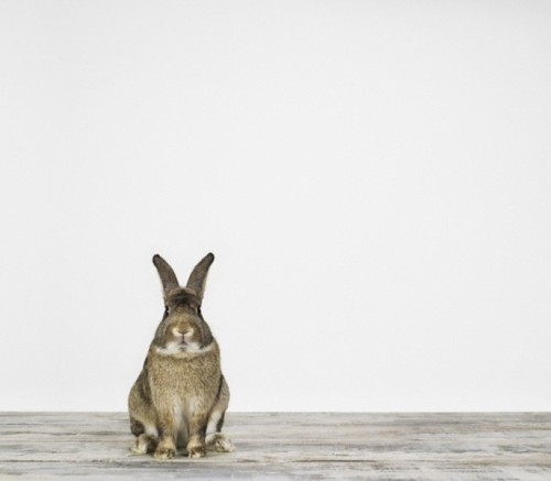 rabbiterize:  Sharon Montrose animal art photography