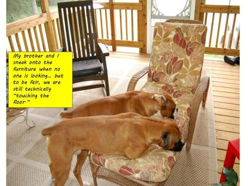 Big dirty dogs shouldn't be on the furniture!