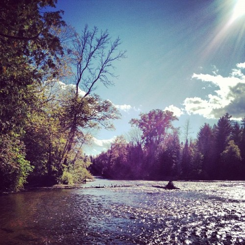 #river #nature #woods #michigan  (Taken with Instagram)