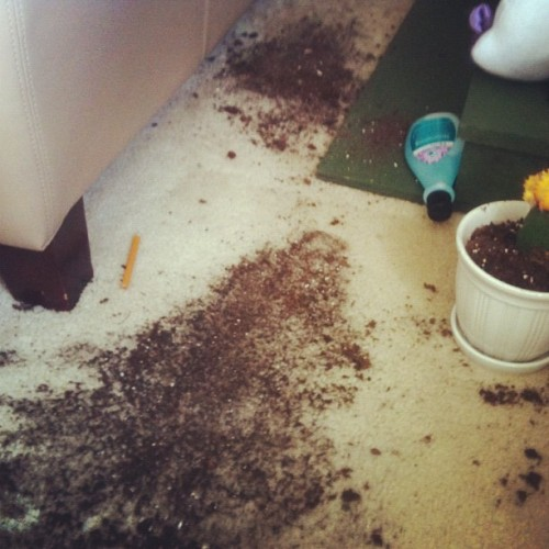 Knocked over my dad's cactus… 😖 Oops.  (Taken with Instagram)