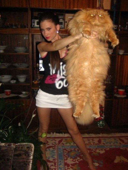 collegehumor:  Hot Chick Holds Large Cat Beast Beauty and the-HOLY CRAP WHAT IS THAT?