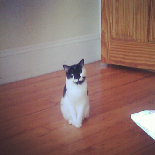 my #cat Roxy she is so #cute #black #white #greeneyes #pets #adorable  (Taken with Instagram)