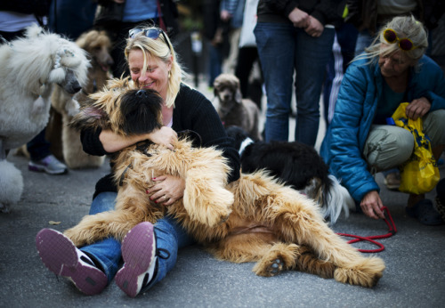Stockholm's 'Dog Day' celebrates Swedish poochesHeld at Kungsträdgården, a famous park in central Stockholm, the event brings together Swedish dog lovers for a variety of fun canine-relate activities and socializing.