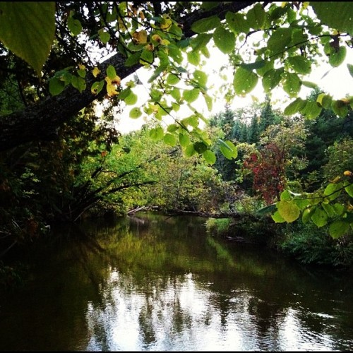 Rifle River #river #nature #trees #reflection (Taken with Instagram)