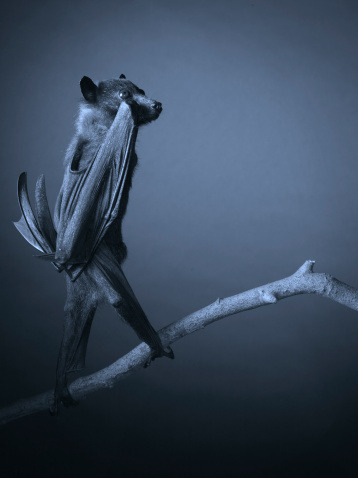 Look out for some exciting news about the fantastic photographer Tim Flach, coming soon.