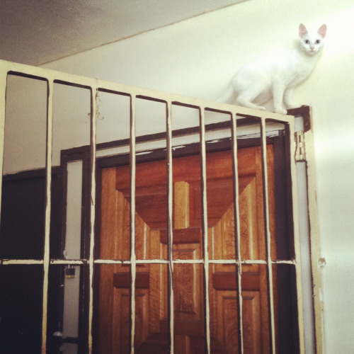 taste-of-magdalena:  She gets up there and then meows for help.
