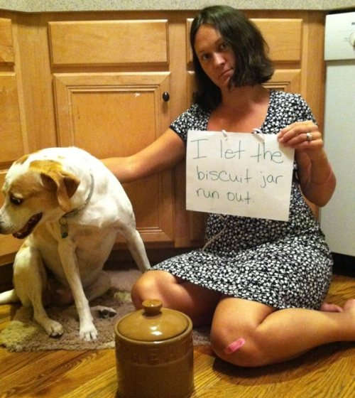 PETA appropriates dogshaming, somehow makes it even less funny, which somehow makes it even funnier