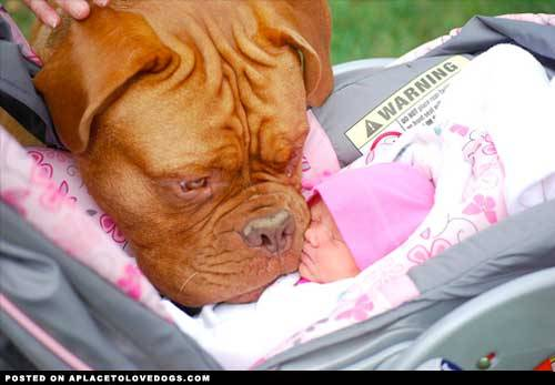 imgur Dog meets baby for the first time!