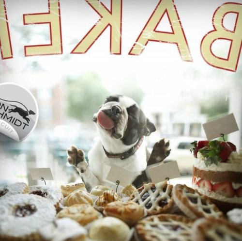 collegehumor:  Dog Just Wants Those Sweet, Sweet Pastries But that window tastes just like a window.