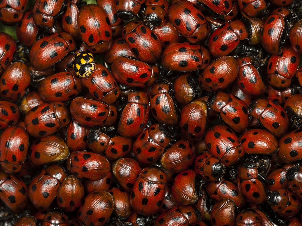 (vía Ladybug Picture — Animal Wallpaper — National Geographic Photo of the Day)