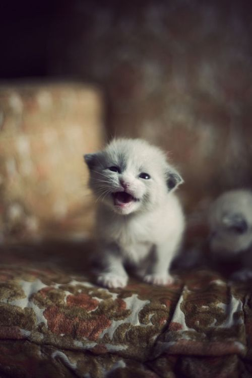 fuckyeahcuteanimalss:  (via Surrender your TUNAZ!)