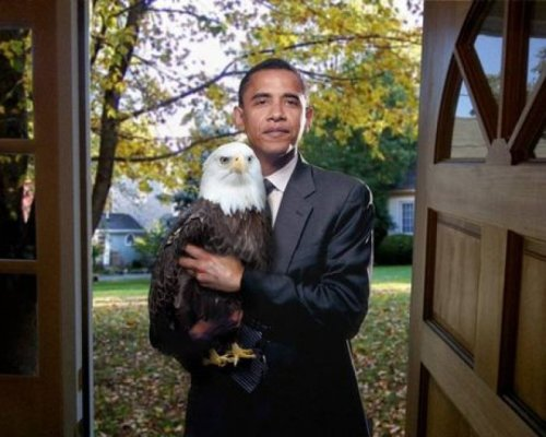 collegehumor:  Barack Obama with Bald Eagle Knock knock. Who's there? Oh, just AMERICA.