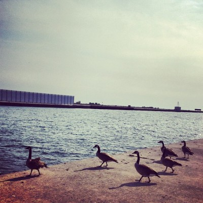 #watching for #airplanes at #porter with the #canada #geese  (Taken with Instagram)