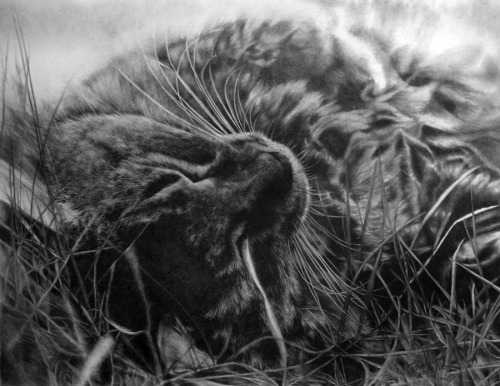 artchipel:  Paul Lung - Friend Cat. A2, 0.5mm 4B mech. pencil, 260gsm drawing paper, 45hours