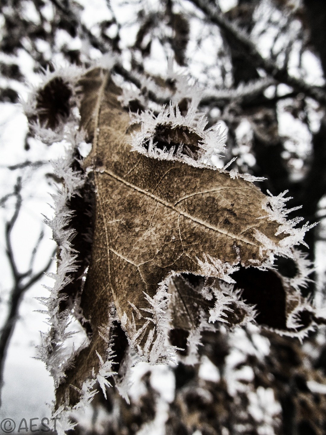 Frozen Fall