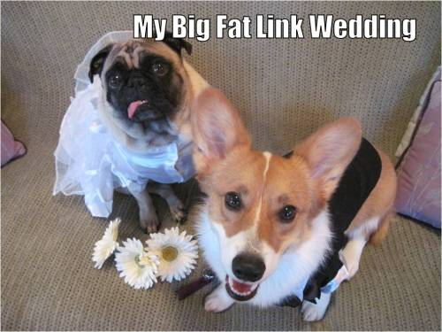 pugandcorgi:  Widget the Pug and Link the Corgi Star in My Big Fat Greek Wedding (2002) Happy Anniversary! Opa! Human Note: A family member bought these costumes for our wedding two years ago. We say they were the unofficial flower girl and ring bearer…  a bride and groom is gross! They are siblings and this isn't Kentucky.