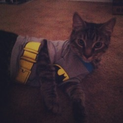Aries…is….BATCAT!!! #cat #kitten #funny #lol #batman #halloween #costume #lolcat (Taken with Instagram)