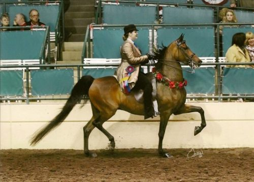 "Me on Highlander Tequila Chaser (""José"") winning Morgan Amateur English Pleasure Championship at Charity Fair, June 2012 This is the horse that I got the ""Though he be but little, he is fierce!"" tattoo for. If you can't tell by the photo I am extremely proud of him. Photo © Rick Osteen Photography"
